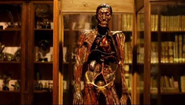 museo anatomico napoli